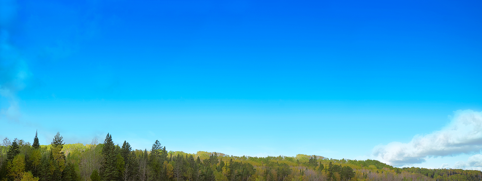This image is of a generic Canadian landscape showing a treeline and blue sky.