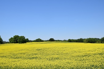 This is a photo of a field.